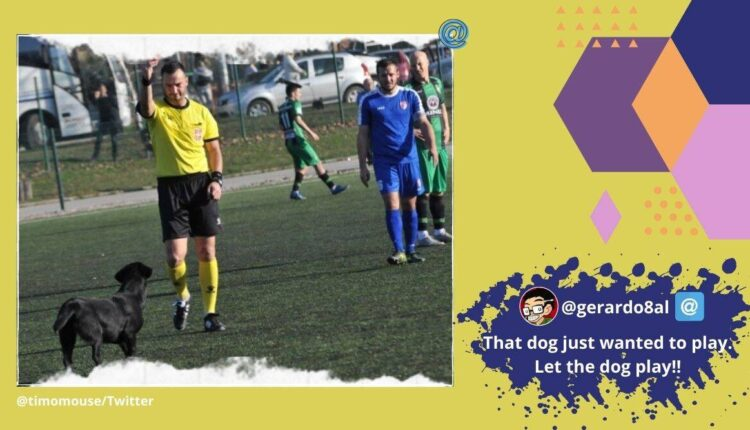 Dog sent off by referee for invading football pitch in